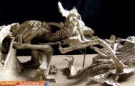 اطلاعاتی جالب درباره ۶ فسیل شگفت انگیز از دایناسورها /تصاویر