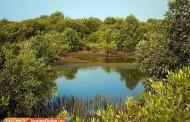 پارکهای جنگلی ایران را میشناسید؟/تصاویر