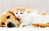با حیوانات خانگی آشنا شوید